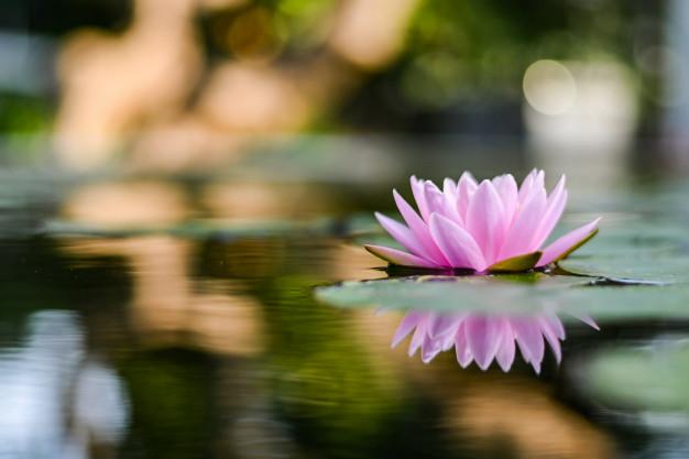 fredfuldt billede