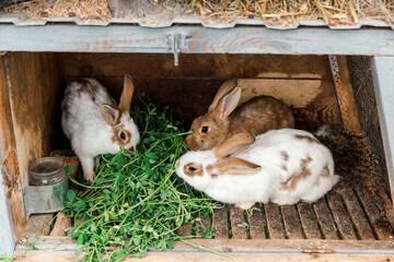 kaniner i udendørs kaninbur